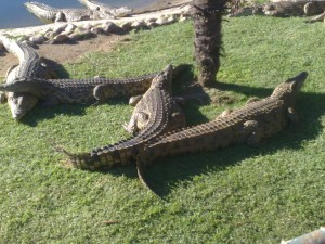 Solar implementation at Le Bonheur Crocodile Farm